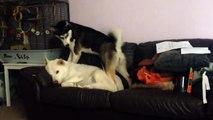 """""""Wake up, wake up, wake up so we can play!"""" =))"""