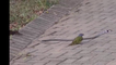 bird defeated a dangerous snake watch this amazing fight