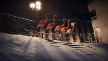 France 3 vous souhaite de joyeuses fêtes - Les flamands roses font du street-ski