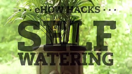 Make a Self-Watering Planter With an Empty Wine Bottle