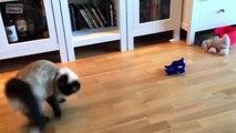 Funny Cats Jump Fail - funny cats compilation - cats funny - cats funny videos - cats funny clips