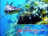 Croisiere Plongee Similan | Plongée en Thailande