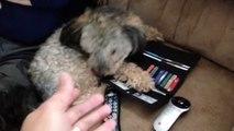 Funny Cash Conscious Dog Won't Let Owner Go Shopping - dogs funny - dogs funny videos - dogs funny clips
