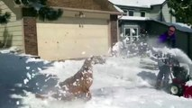 Very Funny Dogs Discovering Snow - dogs funny - dogs funny videos - dogs funny clips