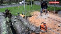 Lannion. David Puech sculpte des arbres abattus à Ker-Uhel