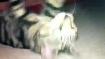 GATO CREE QUE ES EL HOMBRE ARAÑA, JAJA BUENISIMO - Video Humor Gatos - Gatos divertidos lo