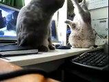 Des chats jouent à Trois Petits Chats