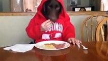 Lustiger Hund - Ein Tag als Hund - Lustig