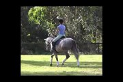 Andalusians For Sale _ Andalusian Horses For Sale _ Five Phases Farm