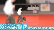 Dog dancing: un concours de toutous danseurs! Aujourd'hui dans la minute chien #72