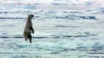 Buzz : Carnage en Arctique: un phoque surpris par un ours polaire !