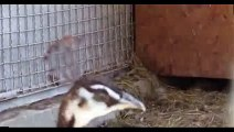New 2016 The Animal Sounds Song - Camel Laughs Like Peter Griffin Funny Videos of novembre 2015