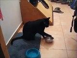 Mira Como El Gato Pide Comida! ★ Gato divertido gato chistoso gato tierno loco risa humor