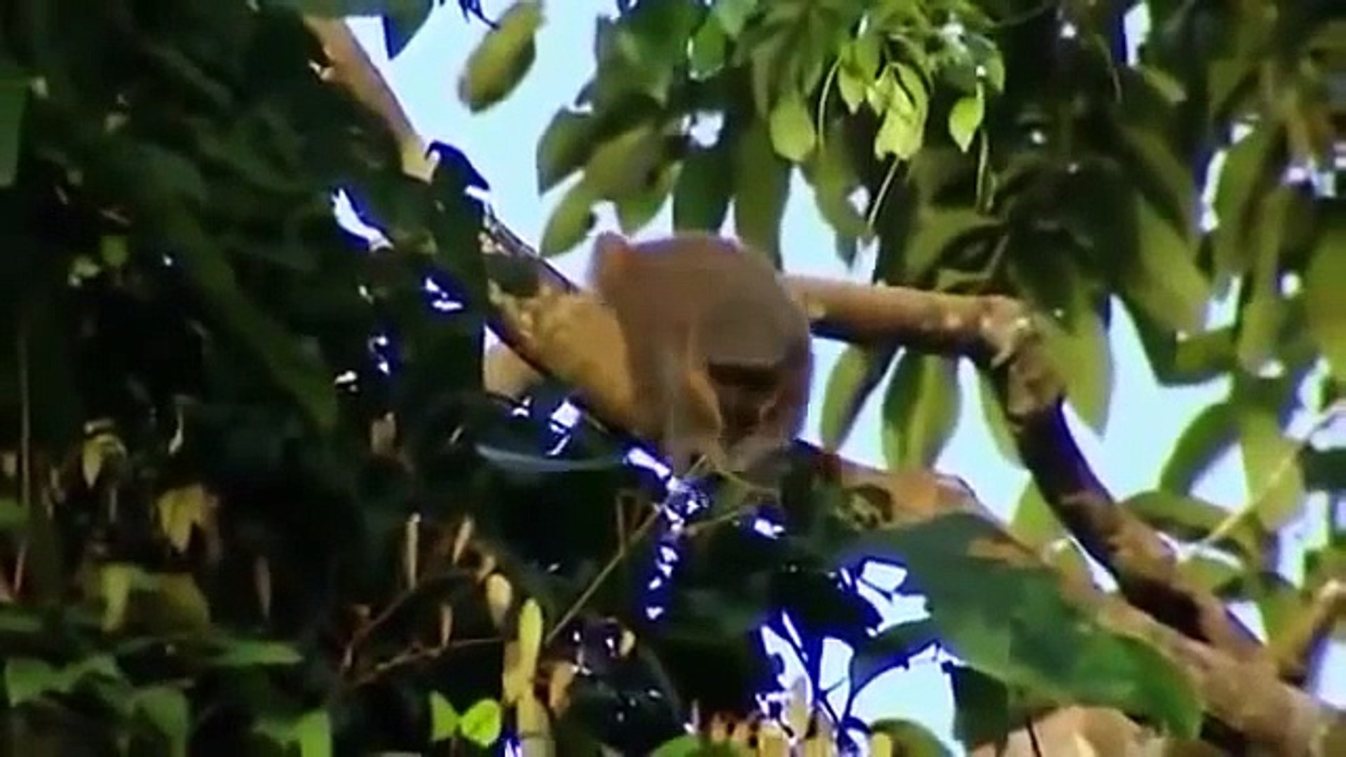 Monkey wildlife   Animals & Documentary Channel 2015   wildlife animal Geographic #007