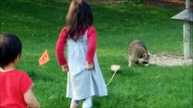 RACOON Two Kids Stop the Raccoons from Bird Feeder Food Fun Kids Videos with Racoon funny kids