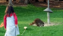 RACOON Two Kids Stop the Raccoons from Bird Feeder Food Fun Kids Videos with Racoon cute raccoon