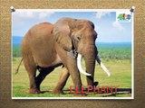 LEARN ANIMALS NAMES- KIDS LEARN ANIMAL NAMES-TODDLERS LEARN ANIMAL NAMES-CHILDREN LEARN ANIMAL NAMES