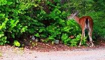 梶原吉広おすすめ「鹿が餌を食べている動画」