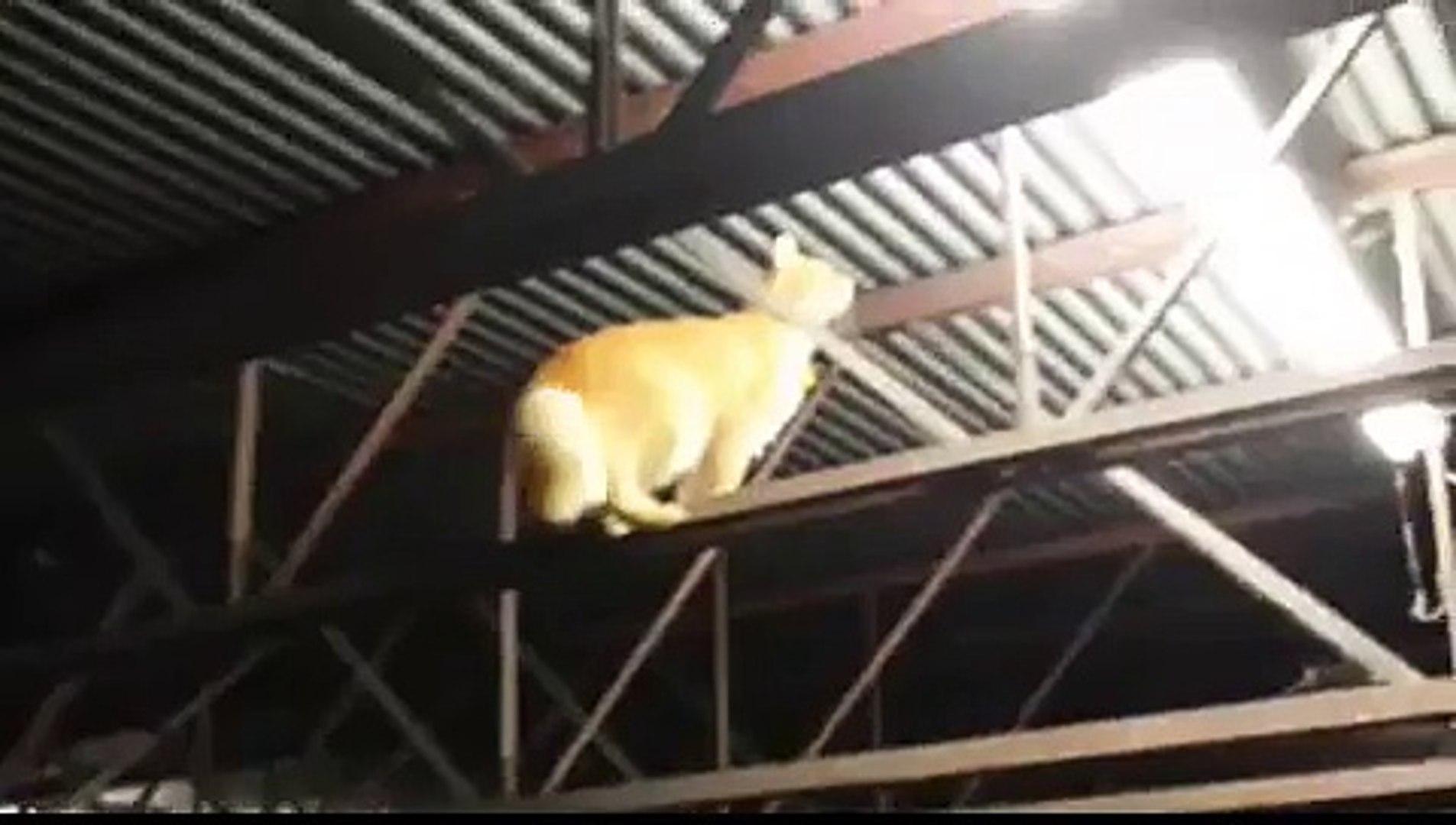 Cat in Garage