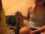 İlgi isteyen sevimli kediler