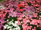 La plus belle musique douce avec les plus belles photos de fleurs
