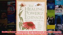 Healing Power of Echinacea and Goldenseal and Other Immune System Herbs The Healing