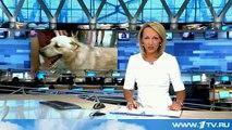 На Дальнем Востоке открыли памятник собаке, ставшей символом преданности и мужества