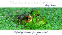 RELAXING SOUNDS OF FROGS. One Hour of Soothing, Meditative Sounds of Nature