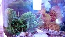 Aquarium - Poisson Rouge