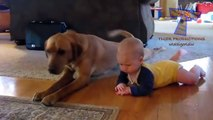 Funny babies imitating dogs - Cute dog & baby compilation