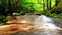 Relaxing Sounds of Water Stream 60mins (The Sounds of Nature)