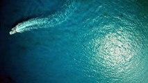 Superbes images filmées par une caméra fixée sur l'aileron d'un requin