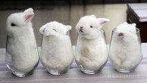 Des bébés lapins dans des verres