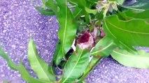 Il met des fourmis rouges dans son slip