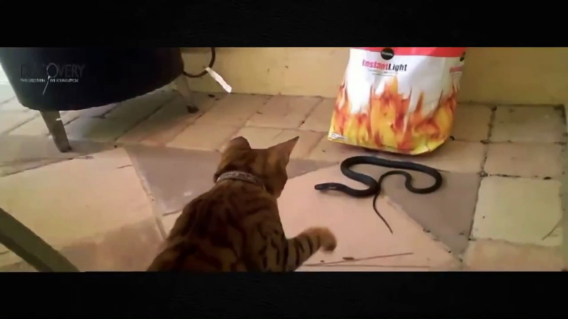 Animals Documentary 2015 - Cats and Snakes Fierce Fighting - The Battle of Animals