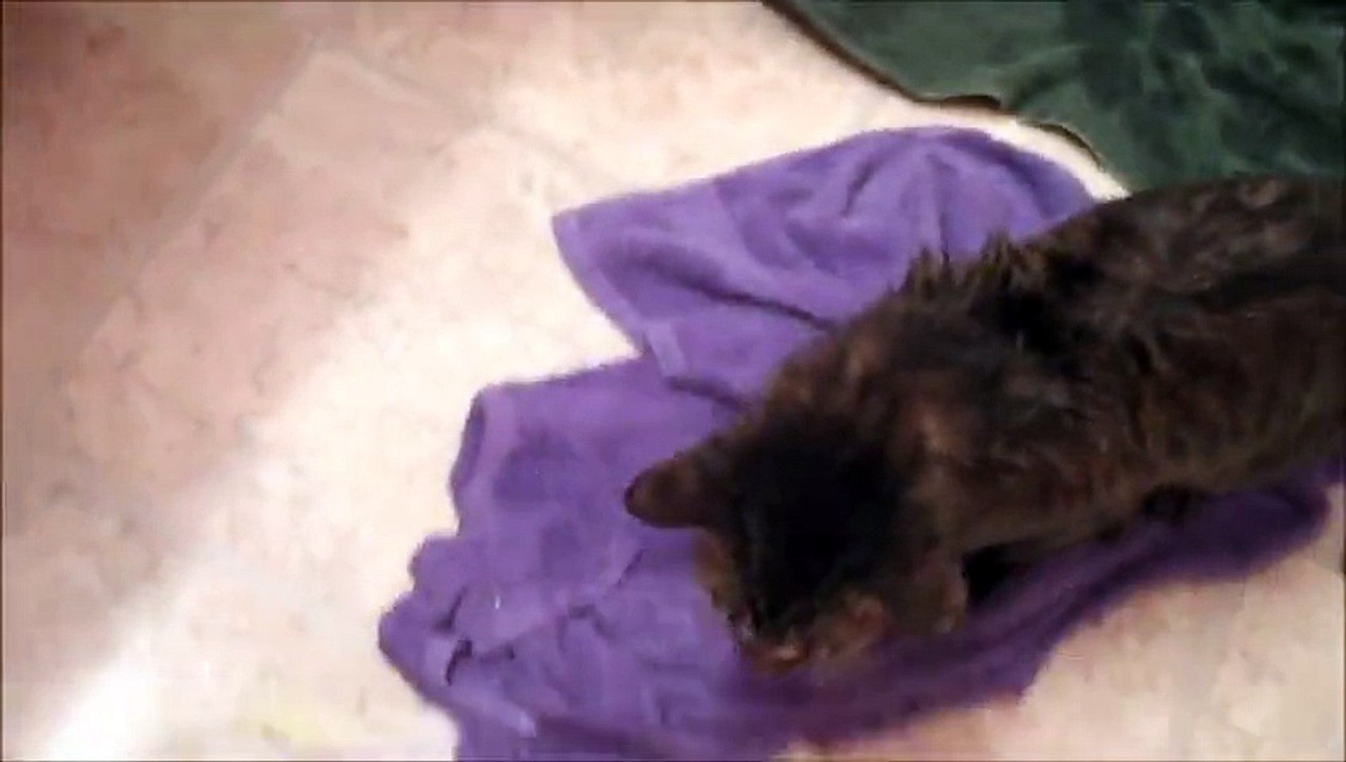 Funny Cat or Kitten Bath Videos - Cat Hates Bath, Duo Playing In Water