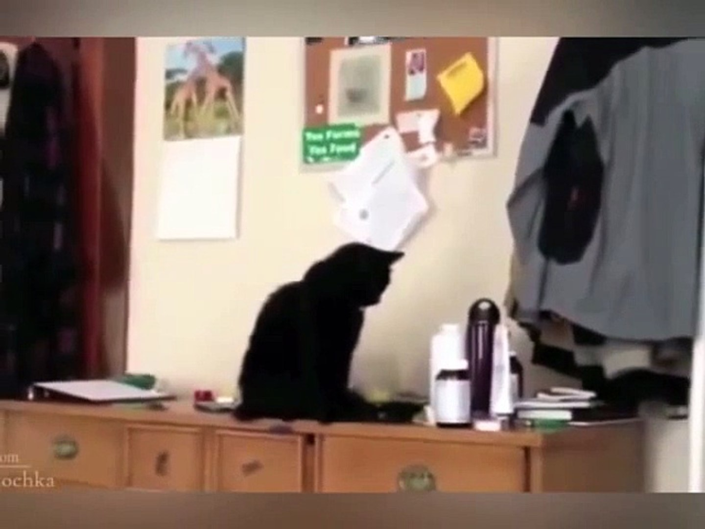 Funny Cats Compilation - Happy New Year 2015(1)