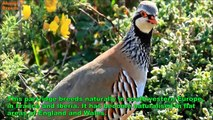 ✔ Top 10 Most Beautiful and Colorful Birds Animals World