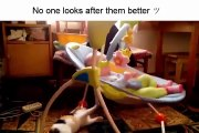 Cats taking care of babies... So cute compilation