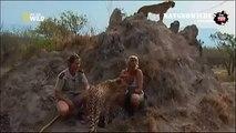 Cheetah attacked reporter. Cheetah attack the peopleAnimal Attacks on Human - Nat Geo Wild ™