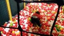 Les enfants de Glissement dans le Parc: aire de Jeux, Piscine, piscine à balles Spectacle. Vidéo pour les enfants. Bimbi plongeur