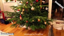 Funny Videos We Wish You A Merry Christmas Funny Cats and Dogs Videos Merry Christmas 2016