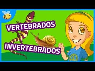 Animales Vertebrados e Invertebrados (Parte 1) - Aula365