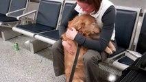 Une chienne retrouve son maitre