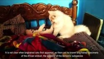 Cute Funny Cats 2016 Funny Cats Video Compilation Most Amazing Persian Kittens Cute Cat Ba