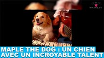 Maple the dog : Un chien avec avec un incroyable talent ! À découvrir maintenant dans la minute chien #84
