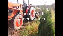 About Spacing Trees and Planting Trees in a Field
