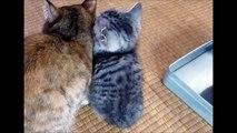 子猫のプチ モモと寝るプチ