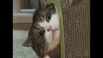 Funny & Cute Animals 2015 !!! Funny Animals Fails Funny Cats & Dogs Funny Pets