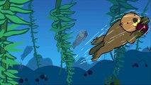 Le bébé loutre de mer dessin ANM éducatif pour enfants vidéo